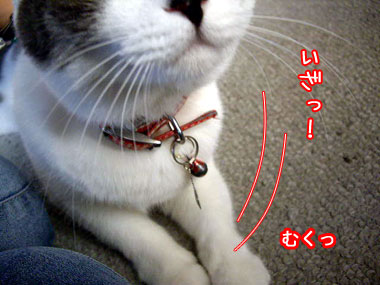 2008-9-10-4.jpg