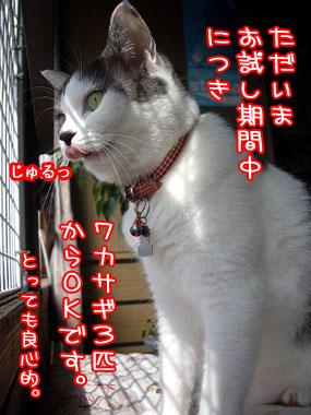 2008-9-20-4.jpg