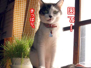2008-9-25-3.jpg