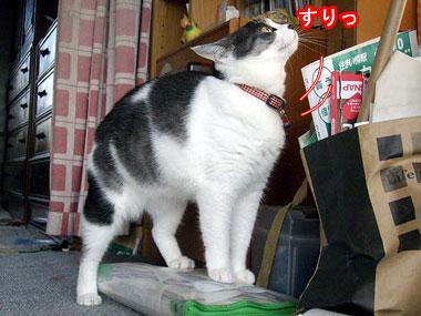 2008-9-3-1.jpg
