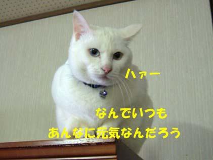 20070410080306.jpg