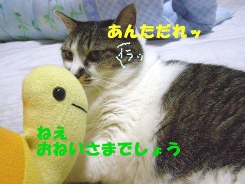20070807174347.jpg