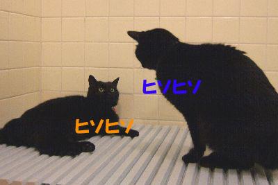 やっぱり黒猫は魅力的だわ~~♪