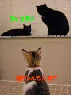 お母さんの白髪染めで黒猫にしてあげようか?