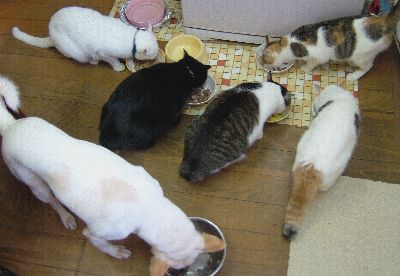一緒になんて食えるかッ! by ちょび