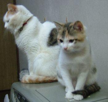 mikitohina1-6.jpg
