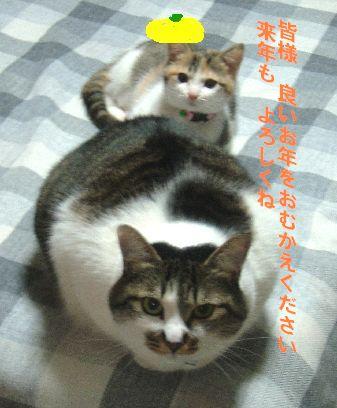 uraratohina2-2.jpg