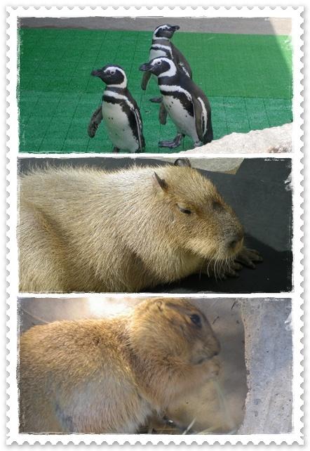 石川動物園6