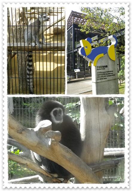 石川動物園3