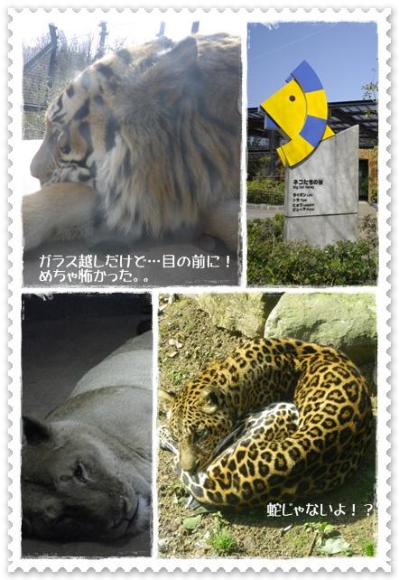 石川動物園4