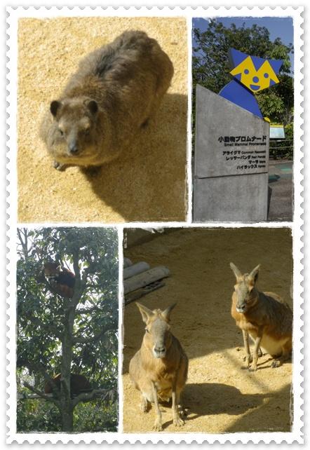石川動物園2