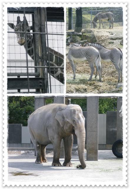 石川動物園9