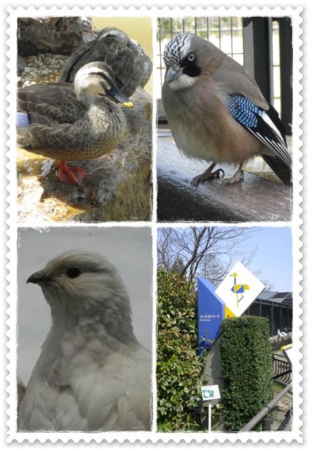 石川動物園8