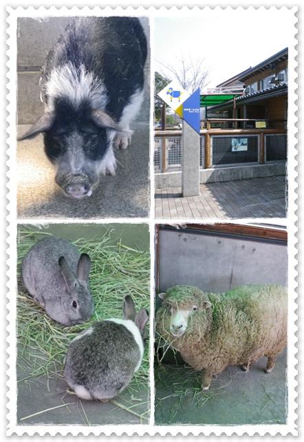 石川動物園7