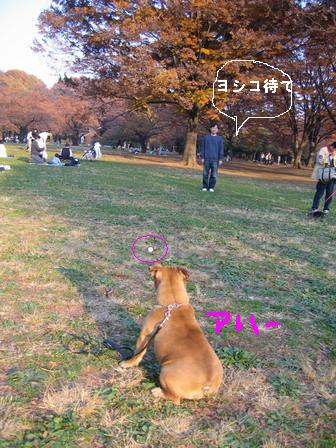 28yoshiko.jpg