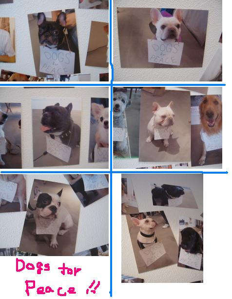 9-dog.jpg