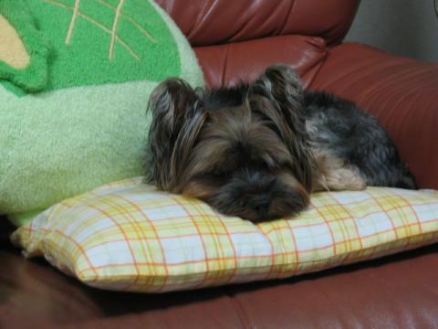 疲れを取るには寝るのが一番でしゅ。