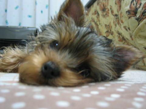 眠いでしゅよ~。