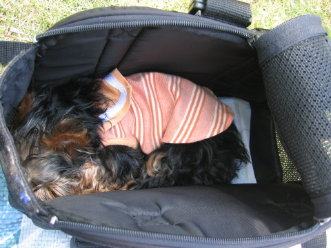 バッグでお昼寝するチロル~☆