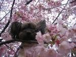 桜でしゅよ。