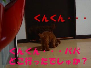 DSC02587s-.jpg