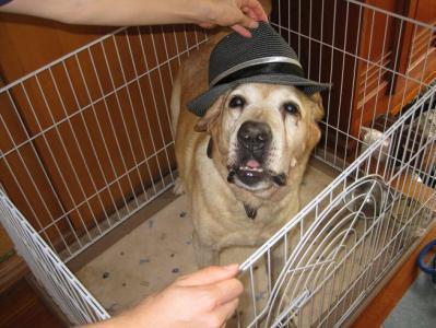 愛犬ラブラドールレトリバーのジョーダン