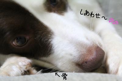 しあわせ~