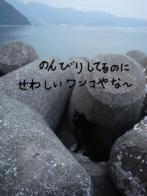 にゃんこ3