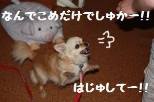 IMG_1136.jpg