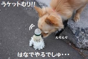 IMG_1343_convert_20090521213706.jpg