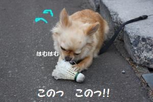IMG_1365_convert_20090521214243.jpg