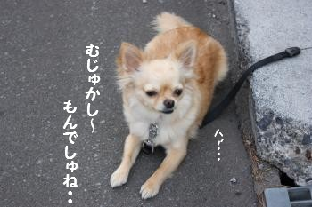 IMG_1367_convert_20090521214907.jpg