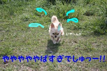 IMG_1586_convert_20090525163805.jpg