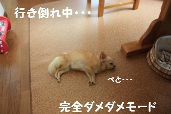 IMG_3372.jpg