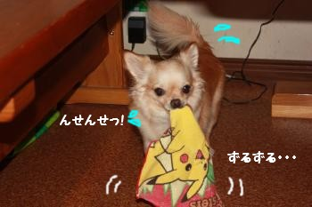 IMG_4084.jpg