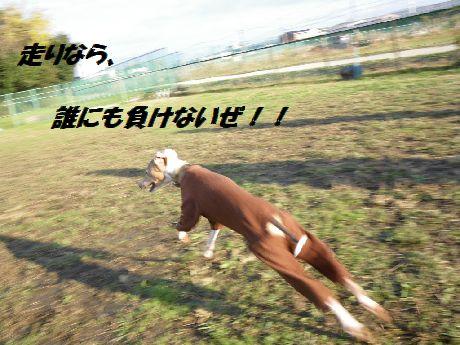 IMGP3755.jpg