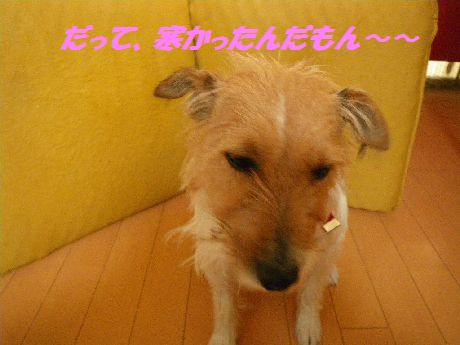 IMGP3897.jpg