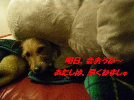 IMGP4605.jpg