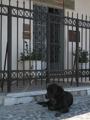 サントリーニ島 フィラにある教会前でくつろぐ犬