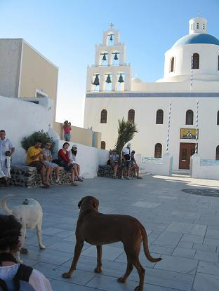 サントリーニ島 イアにて。この広場にはなぜかたくさん犬がいて、じゃれあっていた。