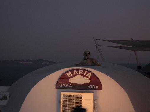 サントリーニ島 イアにて。キクラデス諸島伝統のドーム型の建物の屋根の上で、くつろぐ犬。