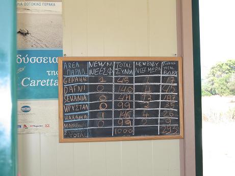 黒板に手書きされている、全ビーチの今日の産卵数、赤ちゃんウミガメの誕生数の一覧表