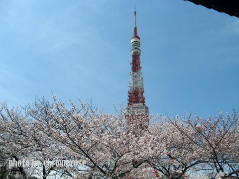 sakura2011_01