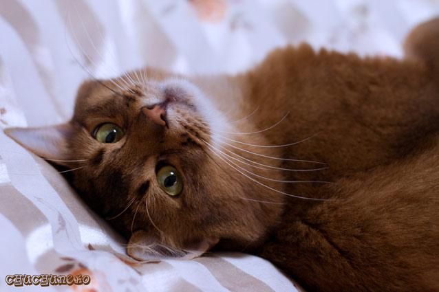 クリアな猫目