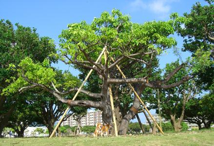 植え直された木の根元で健太郎と紅