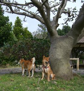 2007/01/03伊佐の公園にて