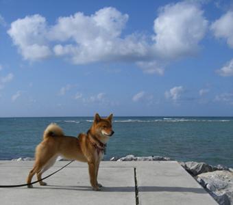 伊佐海岸防波堤上の紅