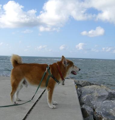 伊佐海岸防波堤上の健太郎