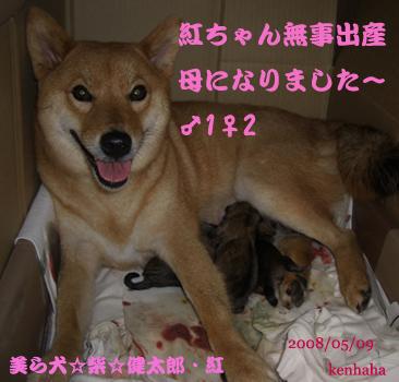 3匹の仔犬誕生