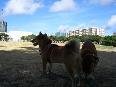 午前8時の新都心公園